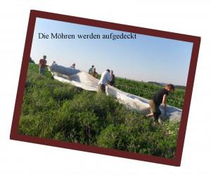 rb6-moehren